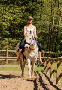 Pferd Bodenarbeit Bad Oldesloe